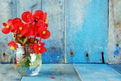 Red flowers over blue wood background. Red flowers in glass jar on blue wood background Royalty Free Stock Photos
