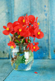 Red flowers over blue wood background vertical. Red flowers in glass jar on blue wood background vertical Royalty Free Stock Photos