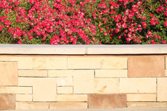 Red flowers over brick Royalty Free Stock Photography