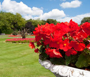 Red flowers in the park Stock Image