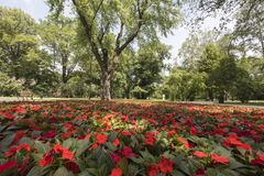 Red flowers in a park stock image