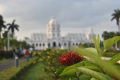 red flowers in park in front of white palace Stock Image