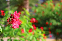 Red flowers in the park near Sarona matket in Tel Aviv, Israel Stock Images