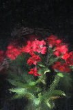 Red Flowers through patterned glass Royalty Free Stock Photos
