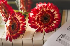 Red flowers on a piano keyboard stock photography