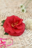 The red flowers and pink ribbon Stock Image