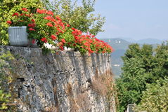 Red flowers in pots on the stone wall Stock Photo
