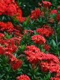 Red flowers. In shade royalty free stock photo
