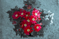 Red  Flowers for Remembrance Day / Sunday. Stock Images