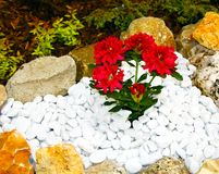 Red flowers in a rockery Royalty Free Stock Photos