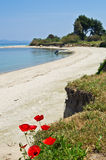 Red flowers on a sandy beach Stock Photography