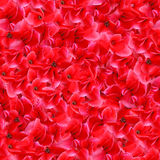 Red Flowers Seamless Pattern. This image can be composed like tiles endlessly without visible lines between parts Royalty Free Stock Photography