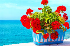 Red flowers on seaside Stock Photography