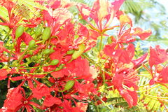 Red flowers like fire. Red flowers shining like incandescent flames royalty free stock photo