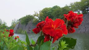 Red flowers by side of moat at ancient ruined Japanese fort royalty free stock photos