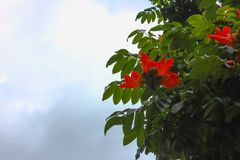 Red flowers with sky background stock photos