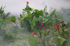 Red flowers and smoke in the garden. Stock Photo