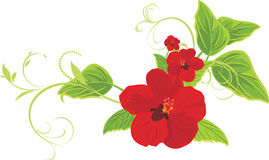 Red flowers with sprigs Royalty Free Stock Image