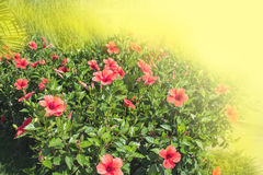Red flowers in sun beams Royalty Free Stock Photos