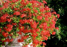 Red flowers in the sun Royalty Free Stock Photos