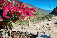 Red flowers in Tibetan village Royalty Free Stock Photography