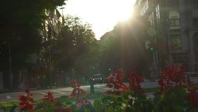 Red flowers and traffic at sunset on a crossroads stock video footage