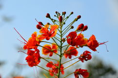 Red flowers. On the tree at the garden Royalty Free Stock Photography