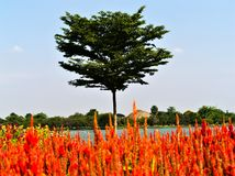 Red flowers and tree with lake stock photo