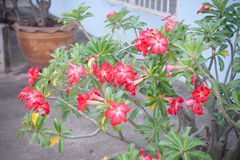 Red flowers on tree; Natural beauty garden. Stock Images