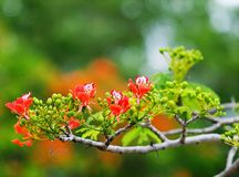 Red Flowers in Tree Photography Stock Image