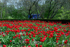 Red flowers tulips. Trees bushes bee hive Stock Images