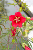 Red flowers 2. Two red flowers on tree Stock Images