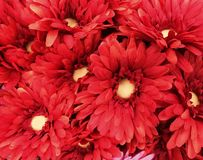 Red flowers. Unique package of red flowers as a background royalty free stock images