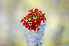Red flowers in a vase on bokeh background with sunlight pattern. Postcard concept royalty free stock photo