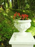 Red flowers in vase, Lithuania. Red flowers in white vase in Sveksna town park, Lithuania stock image