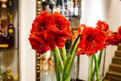 Red flowers in a vase reflected in the mirror, Stock Photo