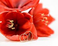 Red flowers with wedding rings. Red Amaryllis with wedding rings stock images