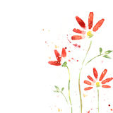 Beautiful summer red flowers, watercolor illustrat. Red flowers on the white background Royalty Free Stock Images