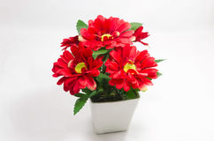 Red flowers in the white background Royalty Free Stock Photos