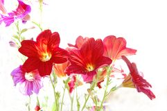 Red flowers on white background Stock Images