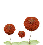 Red flowers on a white background. Stock Photography