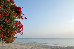 Red flowers on white sand beach. Stock Photos