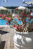 Red flowers. In white stone pot in relax zone Stock Photo