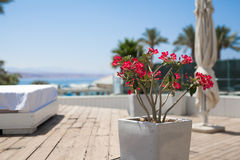 Red flowers. In white stone pot in relax zone Royalty Free Stock Images