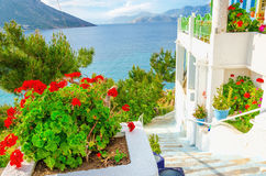 Red flowers and white walls of apartment, Greece Stock Photos