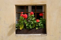 Red flowers in window. Town  Jindrichuv Hradec in southern Bohemia, Czech republic Royalty Free Stock Photos