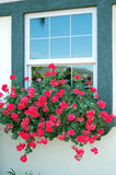 Red Flowers on Window Stock Photos