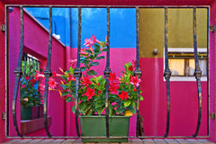 Red flowers on the windowsill, the island of Burano, Venice, Ita Royalty Free Stock Photography