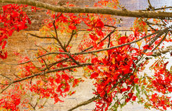 Red flowers on wooden background. Royalty Free Stock Photo
