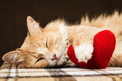 Red fluffy cat asleep hugging soft plush heart toy Stock Image